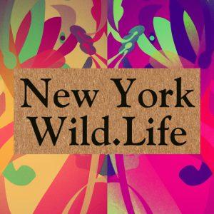 Info@NewYorkWild.Life